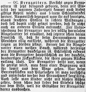19150613_Kreuzottern_566