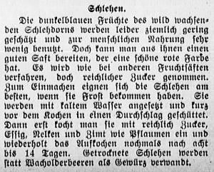19150922_Schlehen_84