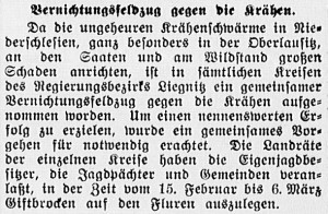19160227_Krähen_238