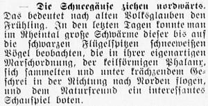 19160322_Schneegänse_261