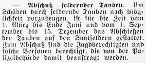 19160322_Tauben_261