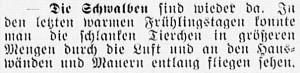 19160428_Schwalben_294