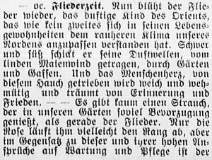 19160514_Flieder_1_308