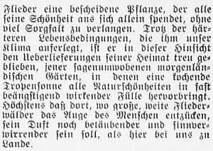 19160514_Flieder_2_308