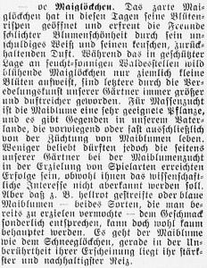 19160514_Maiglöckchen_308