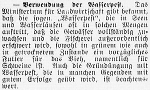 19160519_Wasserpest_312