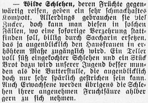 19160915_Schlehen_422