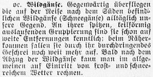 19161006_Wildgänse_442