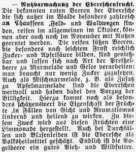 19161129_Eberesche_489